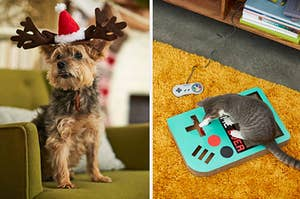 a dog wearing a christmas tree sweater, a cat playing with a retro gameboy scratcher