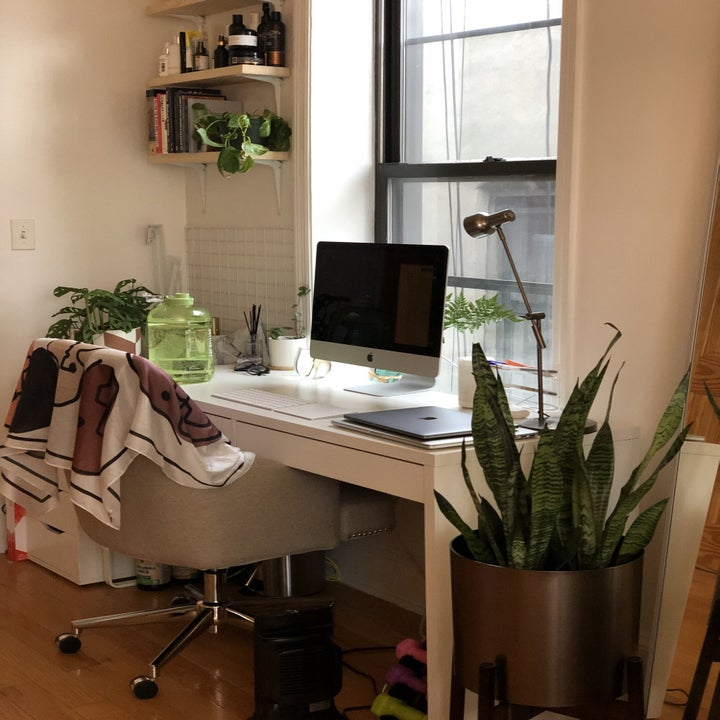 A large snake plant near a reviewer's desk
