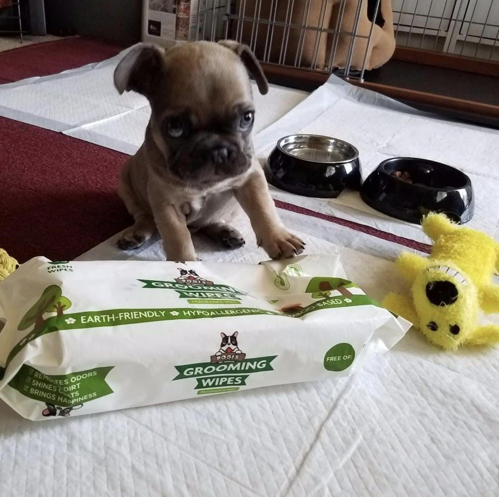 Puppy sitting on deodorizing wipes.