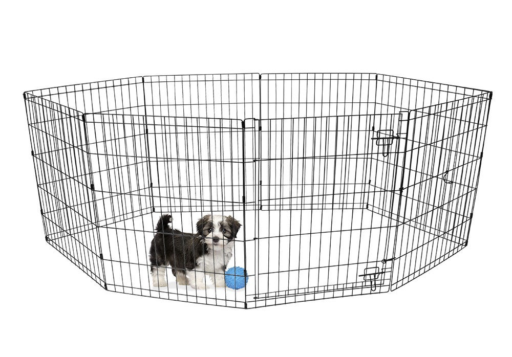 puppy and a ball inside a playpen