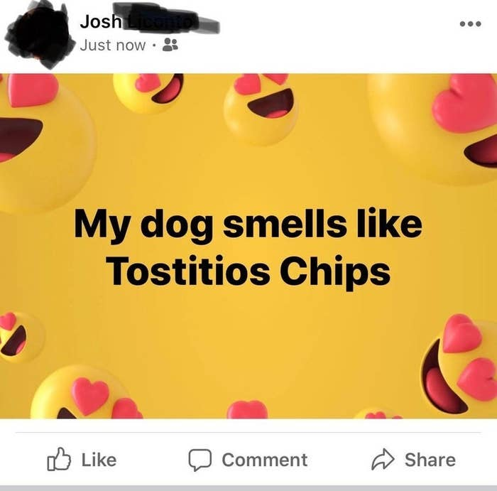 text reading my dog smells like tostitios chips
