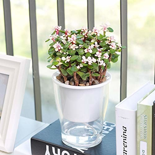 A transparent self-water pot pictured with plants.