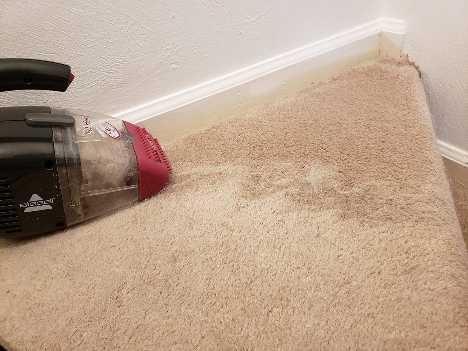 Reviewer's photo of the black and red vacuum getting white hair out of their tan carpet