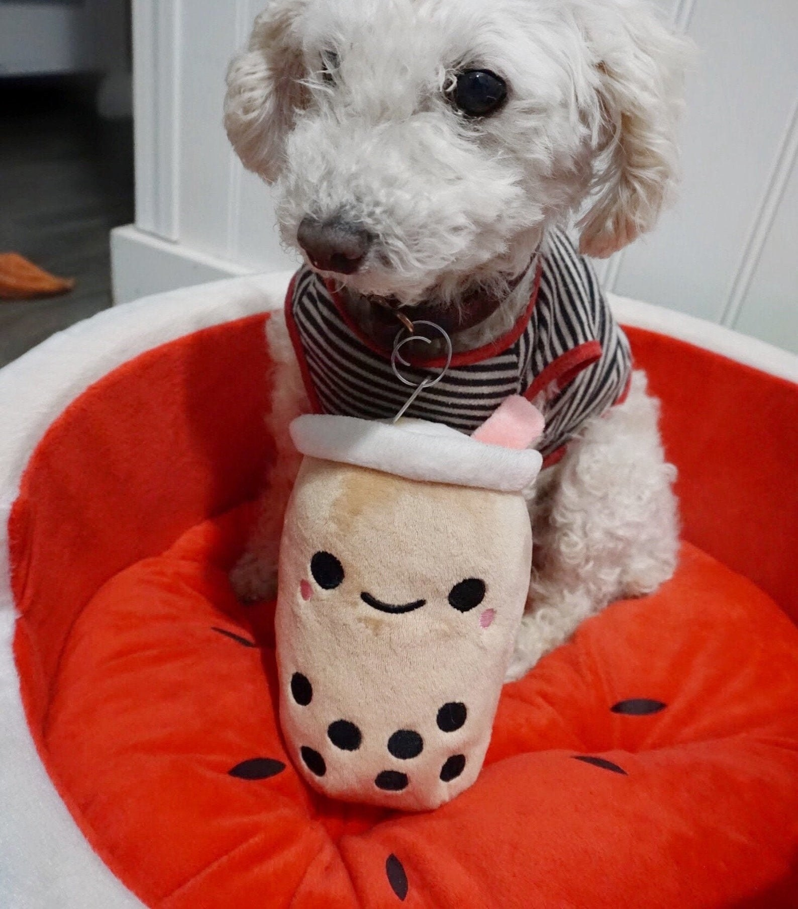 little white dog with the plush