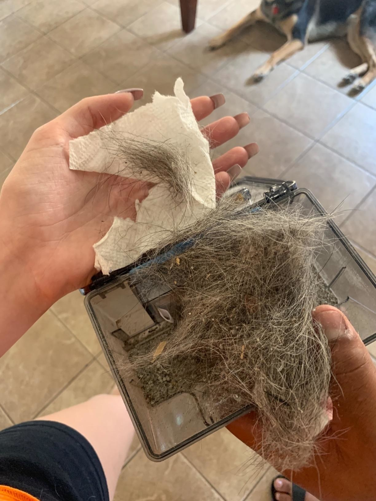 Reviewer's photo of all the pet hair their vacuum picked up