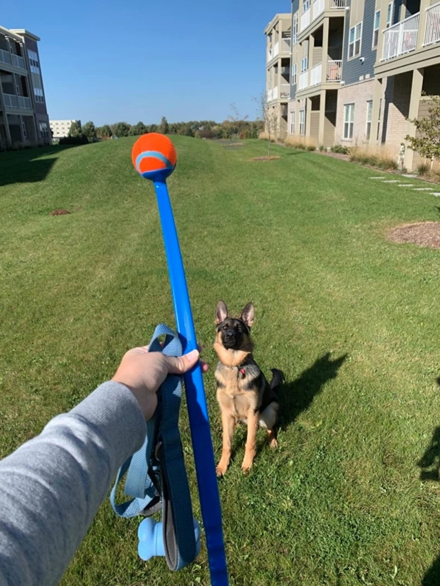 TheChuckit! ball launcher with the reviewer's dog
