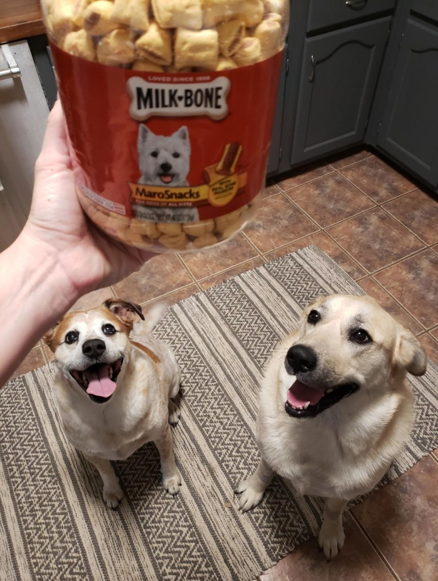 The tub of milk-bone dog treats with a reviewer's dogs