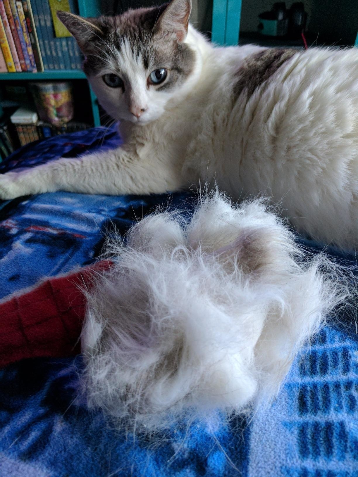 Reviewer's photo of their gray and white cat lying beside a pile of fur