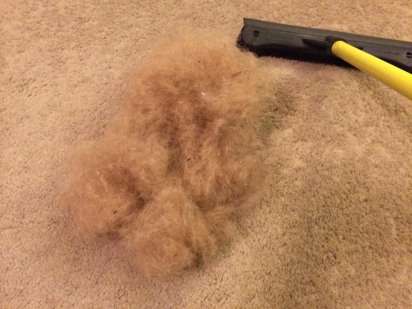 Reviewer's photo of the pet hair stuck in their carpet after using the black and white FURemover