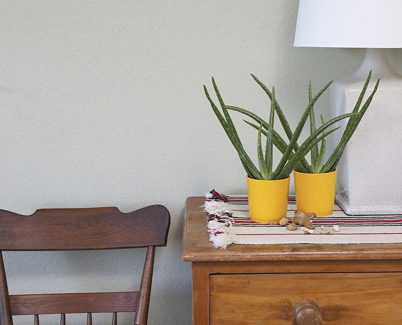 the to aloe vera plants on a dresser