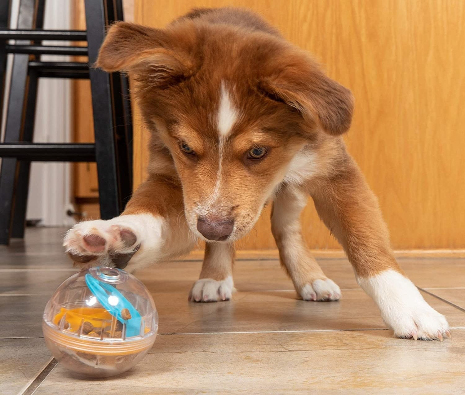 puppy playing with toy that has treats inside of it
