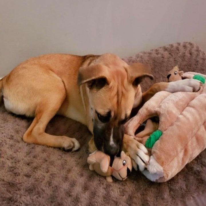 dog sniffing at plush squirrel toy
