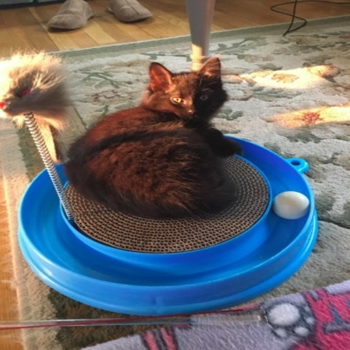cat sitting on a scratcher pad toy