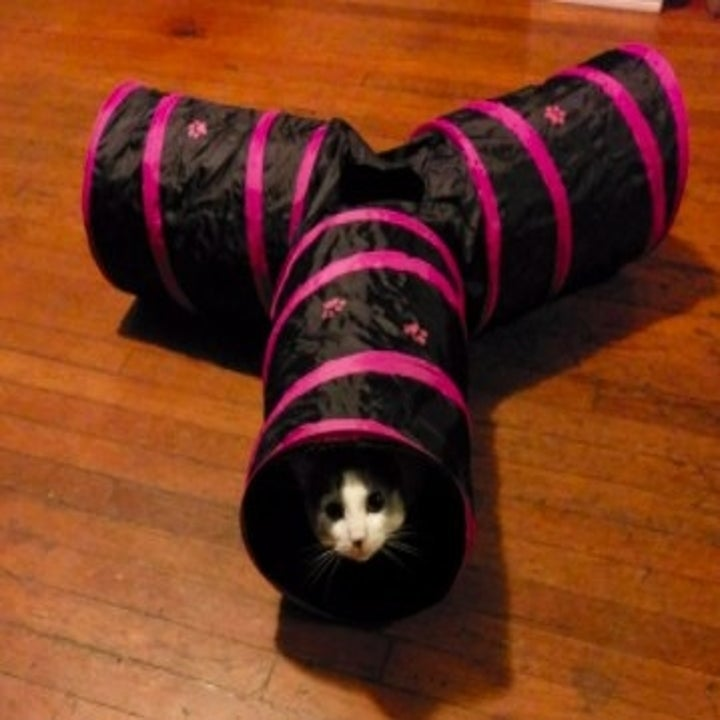cat poking out of a collapsable cat tunnel