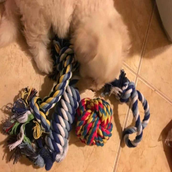 puppy sniffing at four rope toys