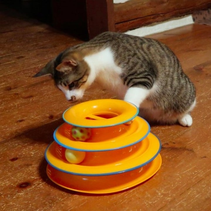 a cat eyeing the balls in an orange tower toy