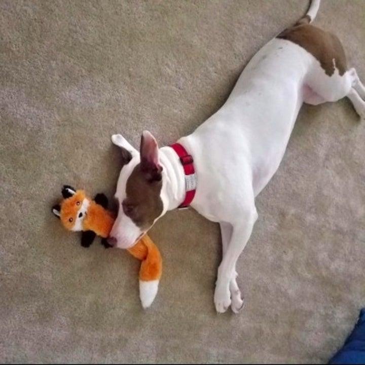 dog resting head on a fox chew toy