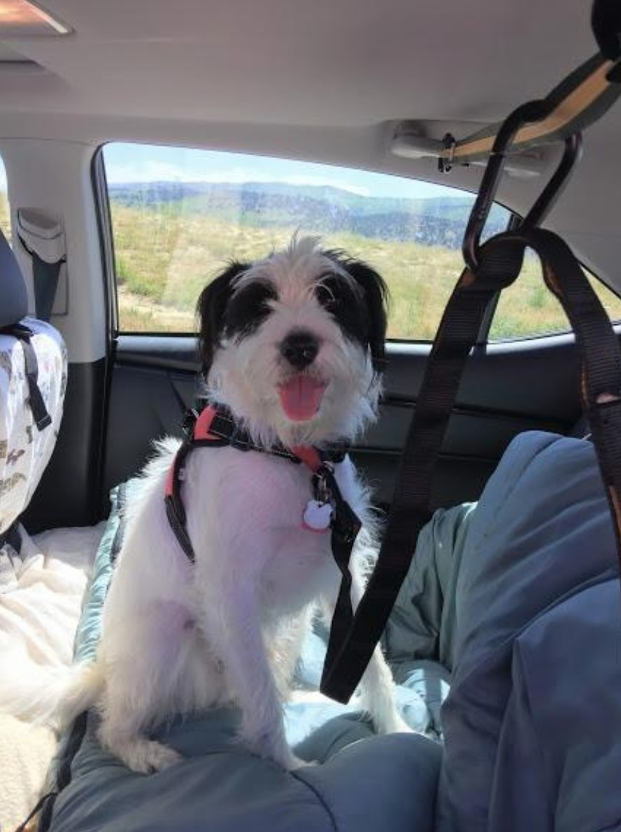 Reviewer's dog buckled in the backseat