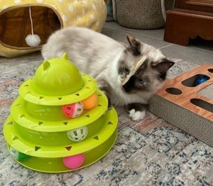 Reviewer's cat playing with the toy