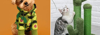A fluffy dog in a hoodie with avocados on it, and a cat with a scratching post shaped like a cactus