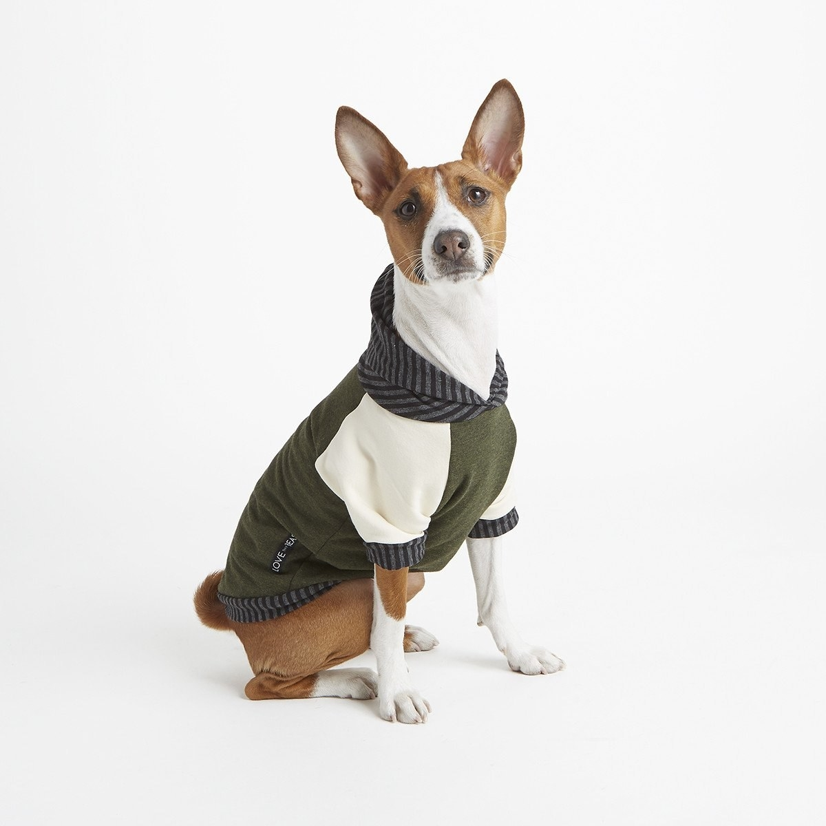 dog wearing a fleece hoodie with short sleeves. It is green and beige with a grey and black striped hood.