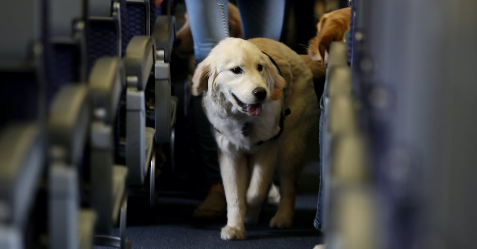 Image of article 'Airlines In The US Can Now Ban Emotional Support Animals From Flights'