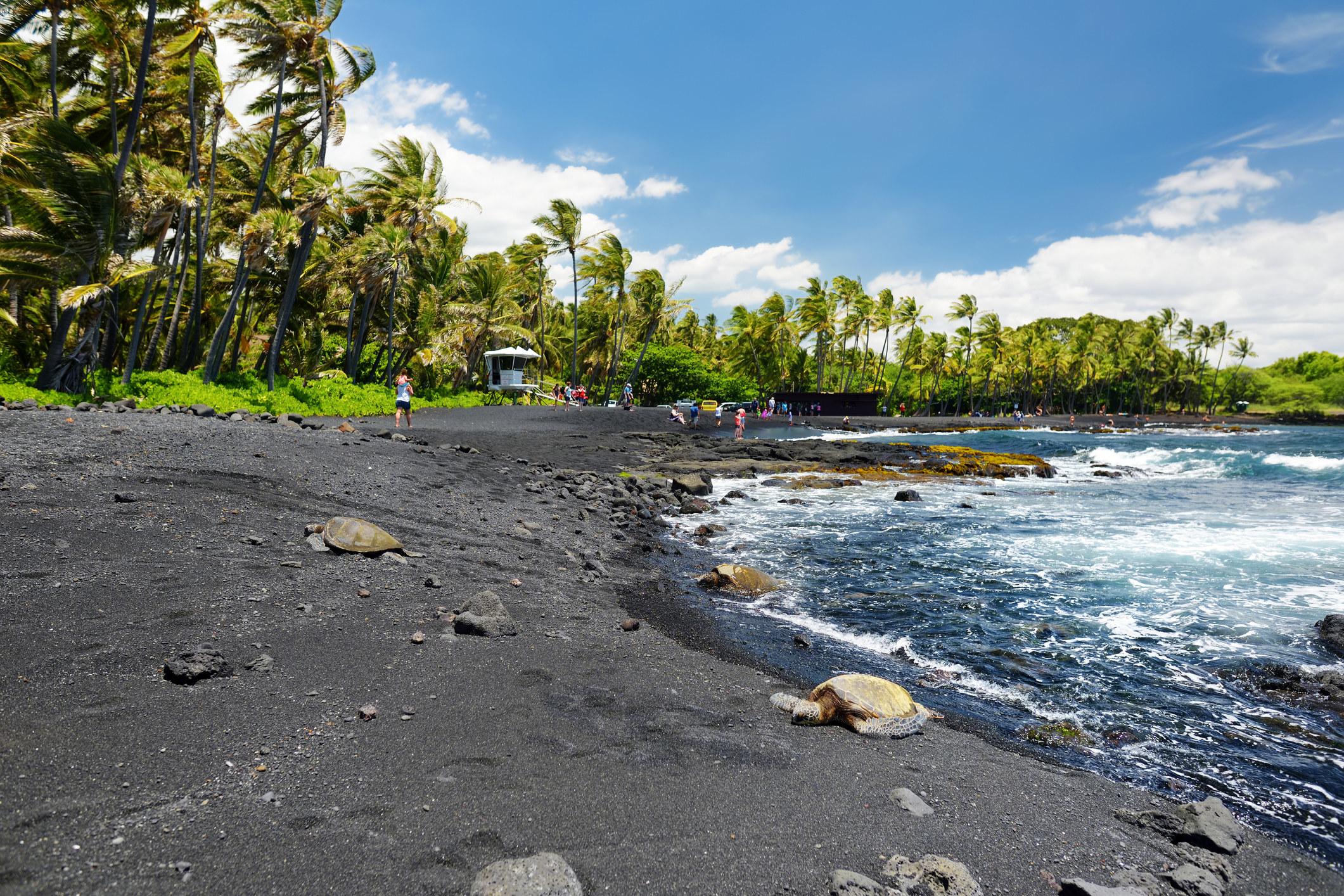 Turtles sunning on a palm tree–lined black sand beach
