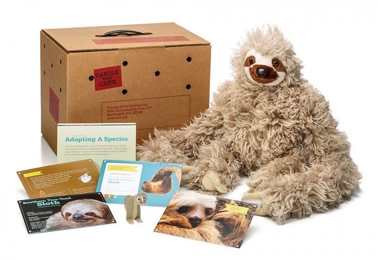 A sloth plushie sitting in front of a cardboard box with a mix of sloth-related fact cards and an adoption certificate