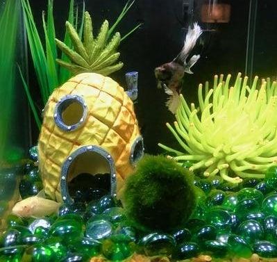 The ornament in an aquarium
