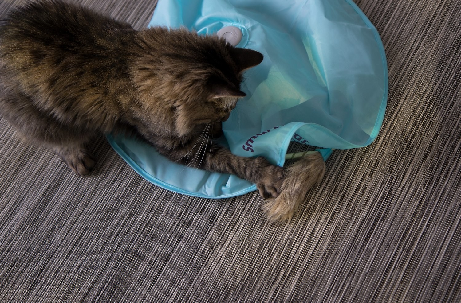 A cat playing with the toy