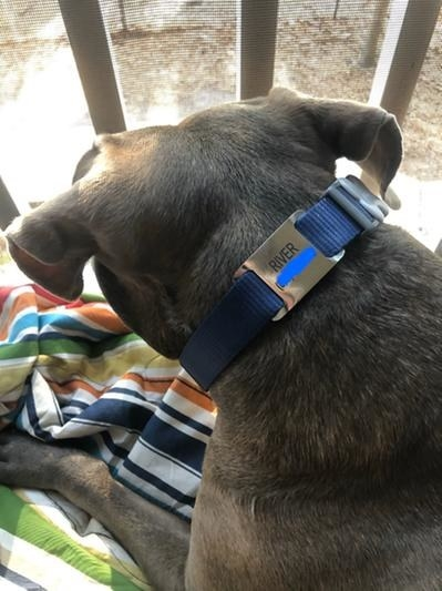A dog with the tag on its collar