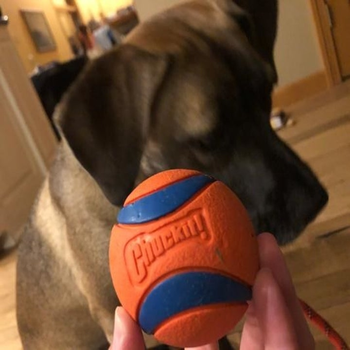 A person holding the ball, with a dog in the background