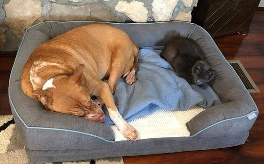 A dog and cat in the bed