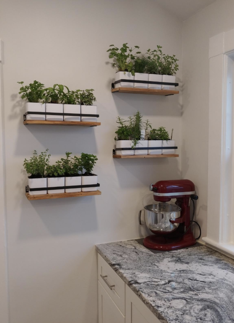 Floating shelves used to hold house plants