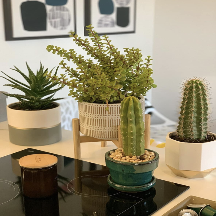 Customer's plant section featuring ceramic pot and wood stand
