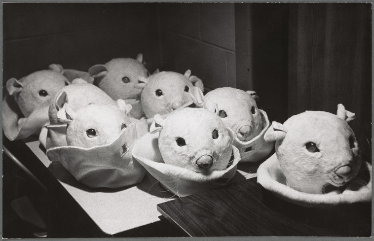 Mouse head costumes arranged on a table