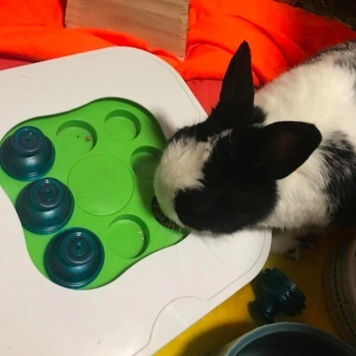 bunny eating out of an interactive toy