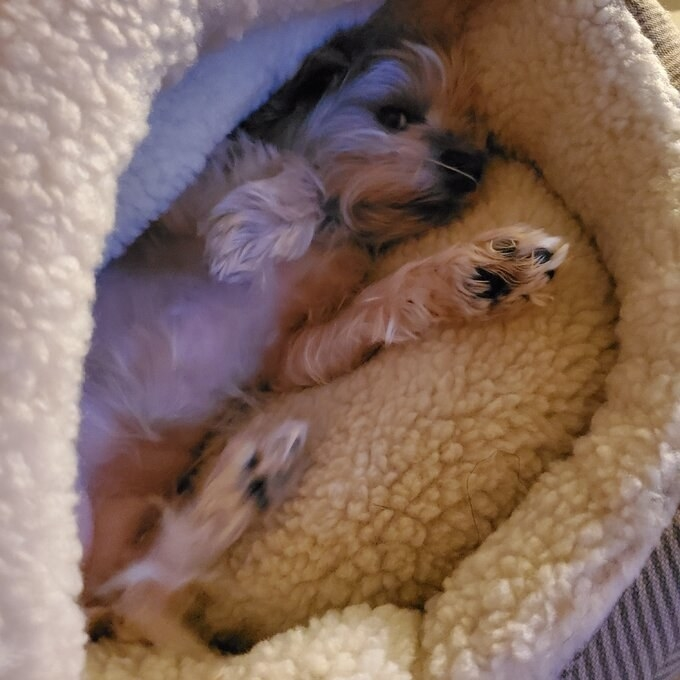 Reviewer's dog in the snuggly bed