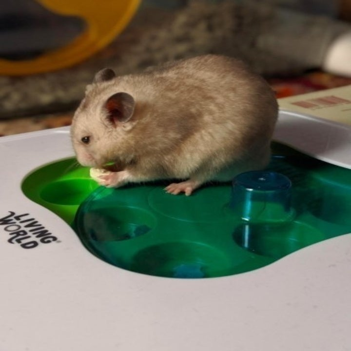 hamster eating a treat out of an interactive toy