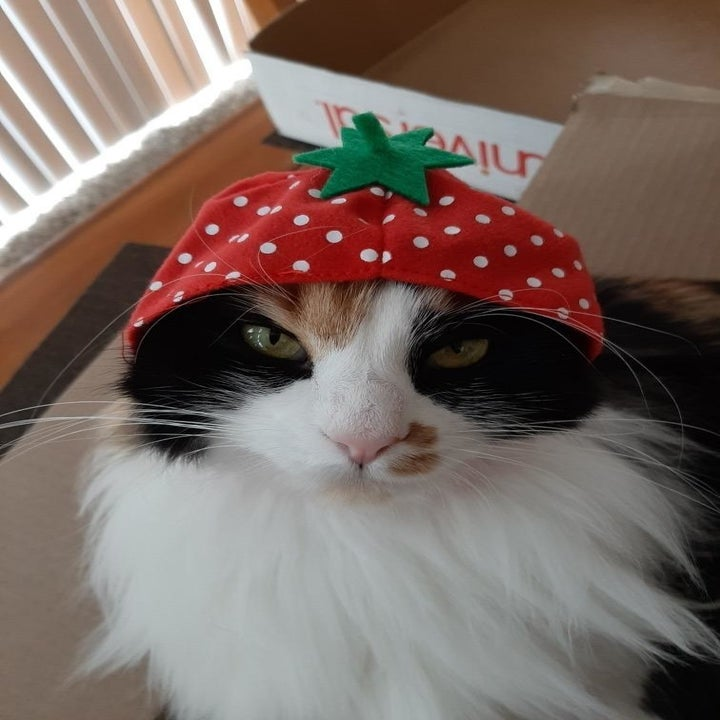 cat wears strawberry cap