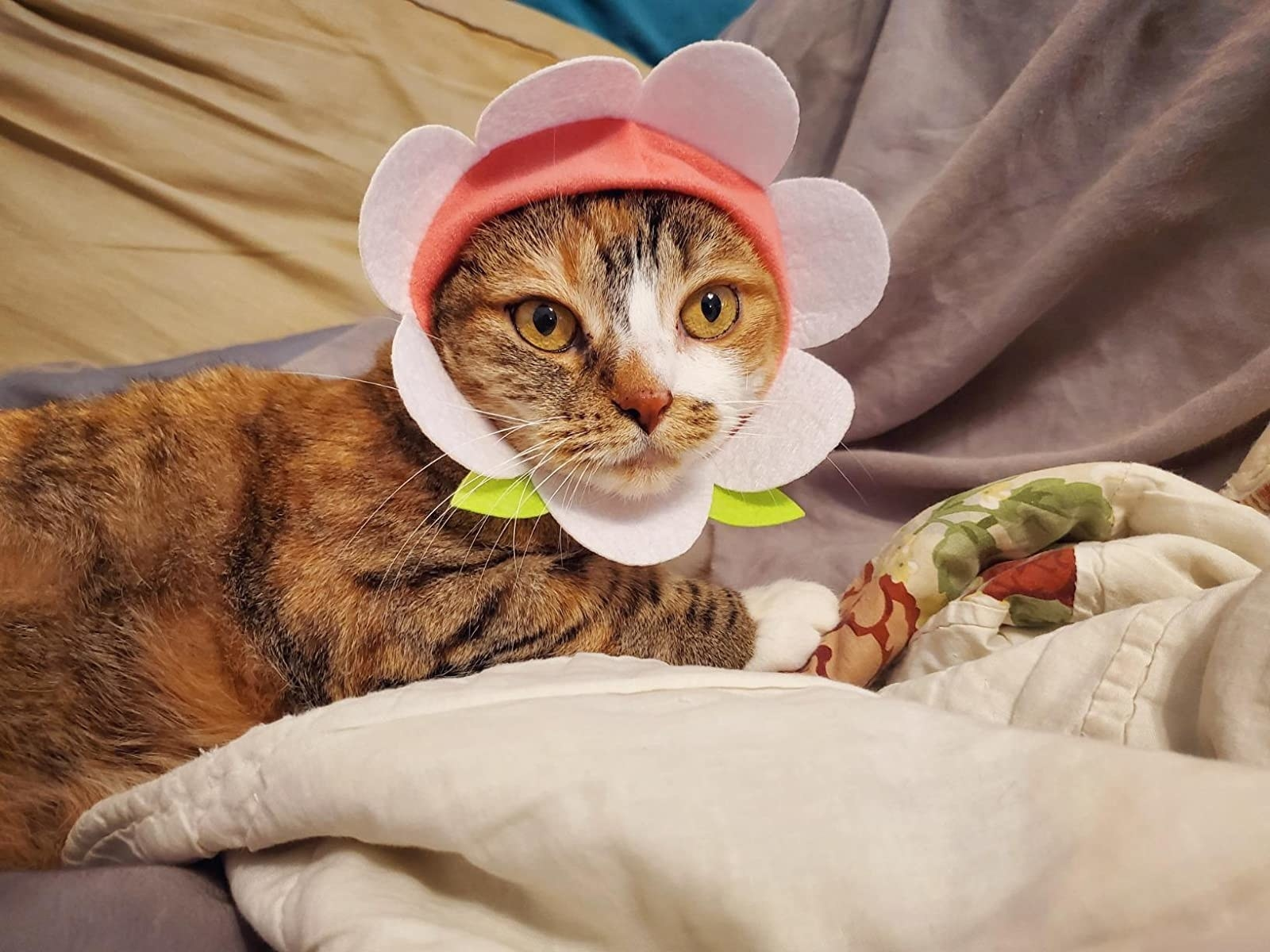a cat wearing the flower shaped cap