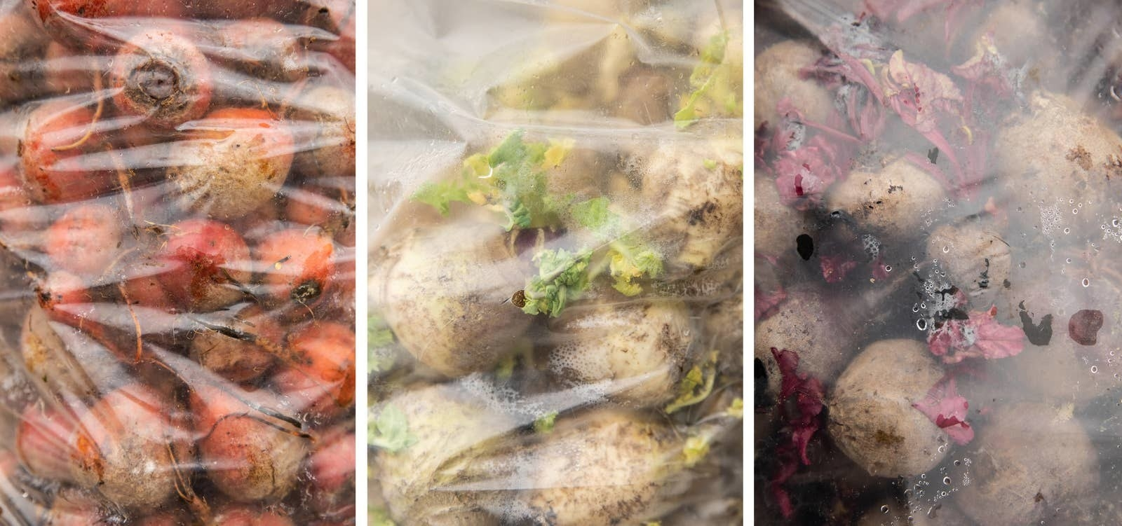 Three plastic bags with beets in them