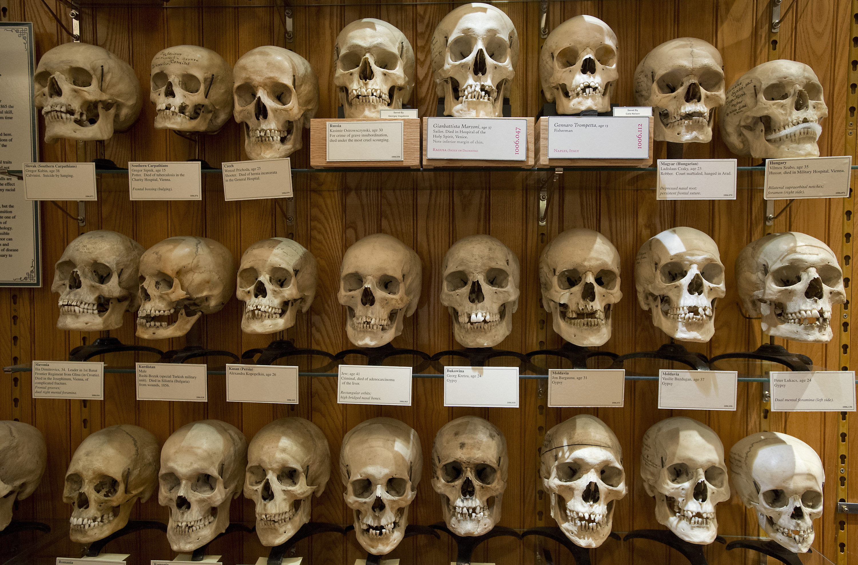 Shelves of skulls with placards