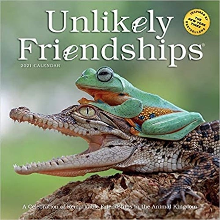 "The cover of the calendar, which reads ""Unlikely Friendships"" and has a picture of a frog sitting on top of a crocodile"