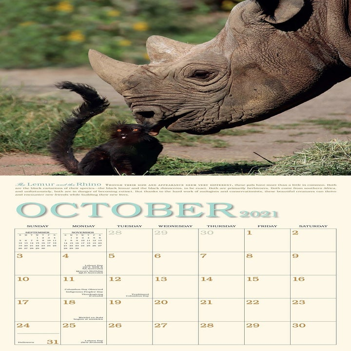 The November page, with a rhino giving a lemur a kiss