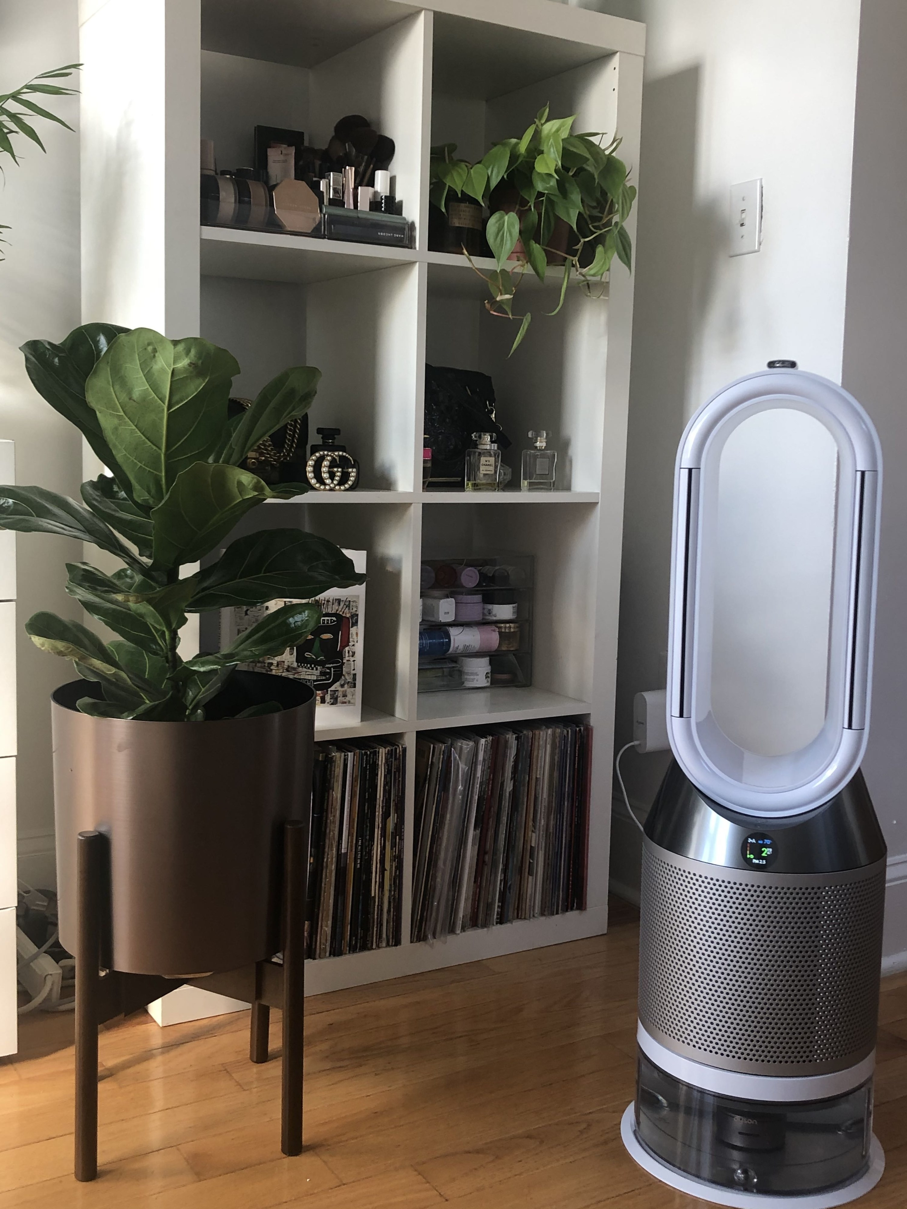 The humidifier, which is about the size of a fiddle leaf fig plant