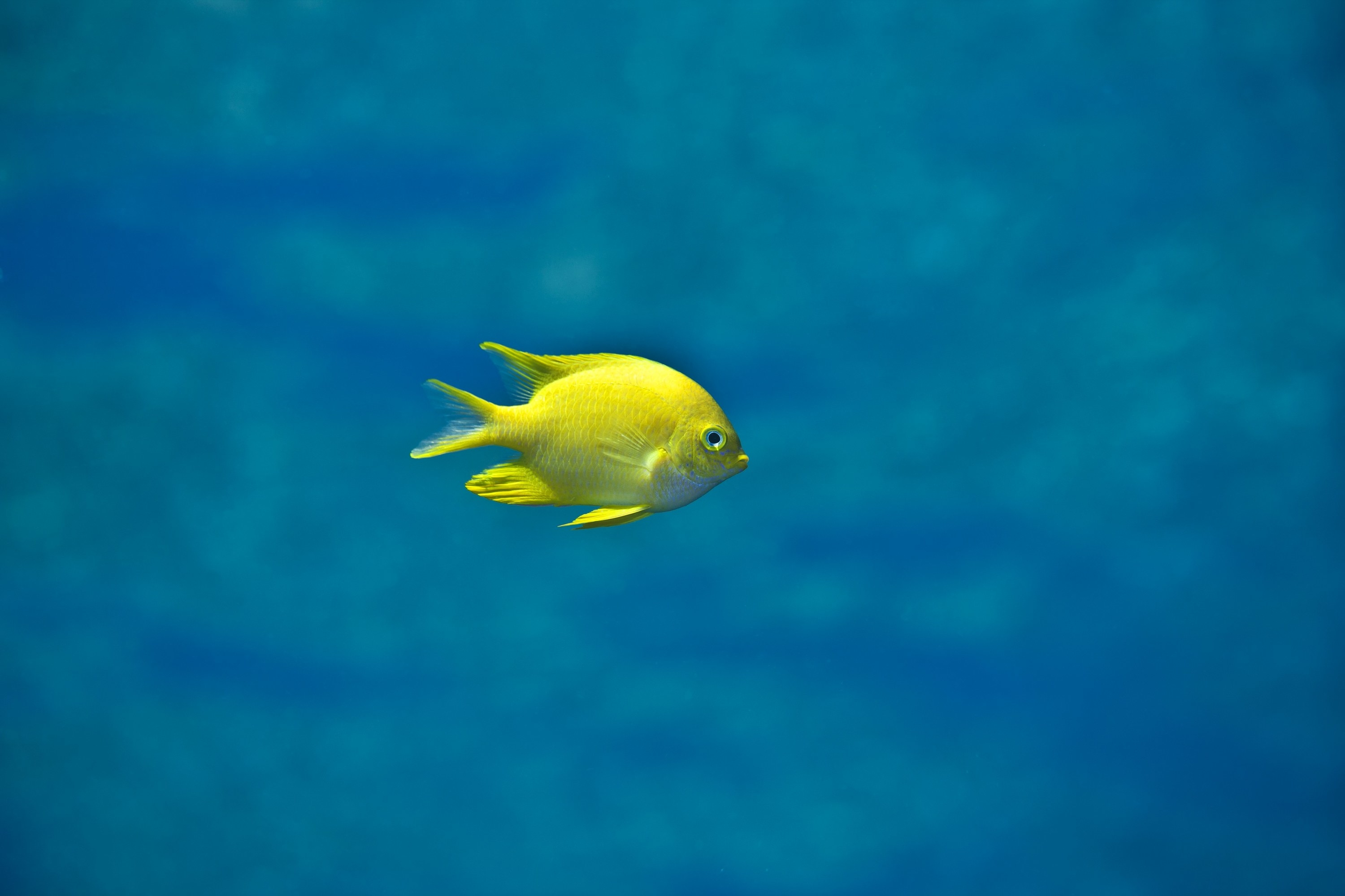 A small yellow fish