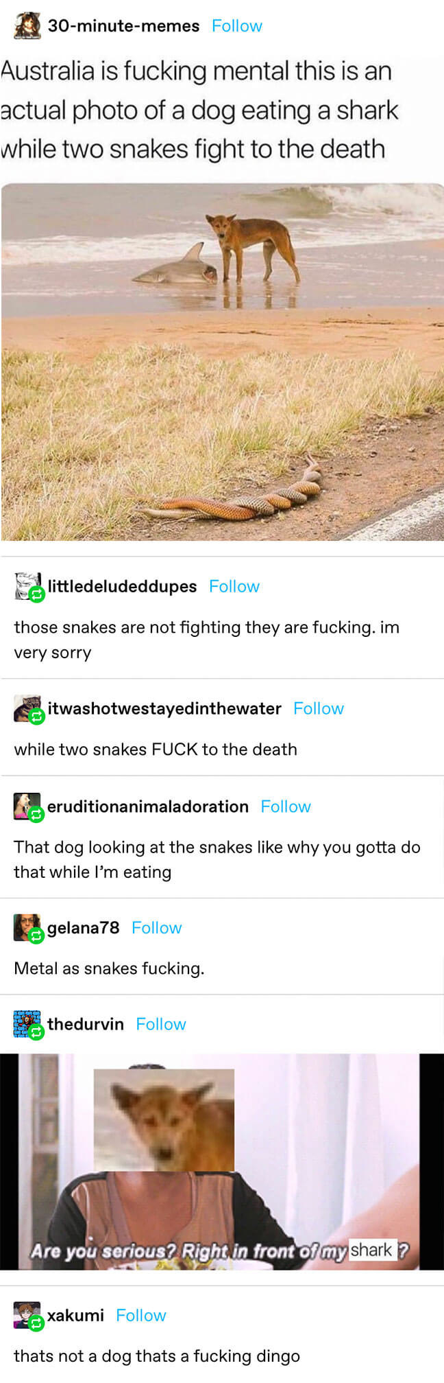 everyone comments on a dog eating a piece of dead shark while 2 snakes fight, until it's clarified that the snakes are having sex and the dog is a dingo