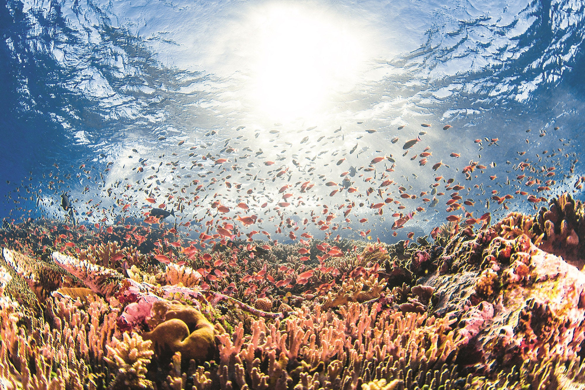 These Mesmerizing Coral Reef Images Show What Climate Change Could Take From Us