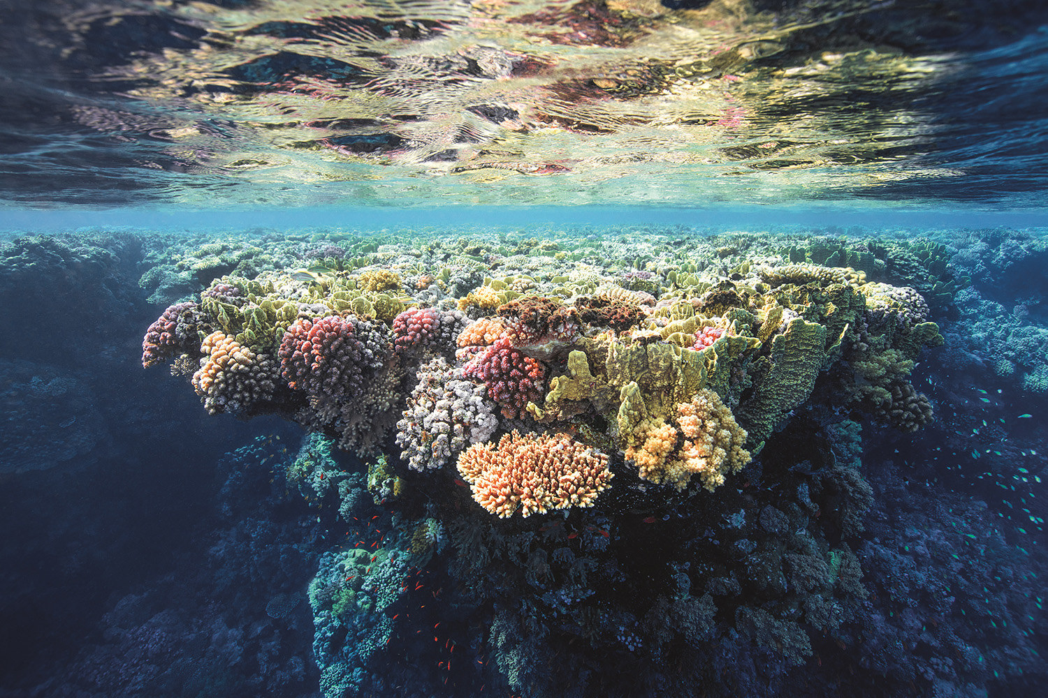 A coral reef sits just below the water's surface, illuminated by sunlight